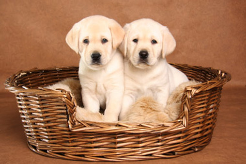 A basket of tax deductions? Possibly.