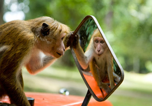 http://media.thinkadvisor.com/advisorone/article/2013/04/04/Monkey_Mirror_MI-resize-600x338.jpg