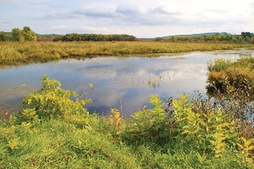 A swamp in Vermont. (U.S. Fish & Wildlife Service photo/Ken Sturm)