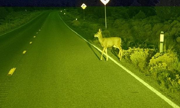 Deer in he headlghts (Photo: Thinkstock)