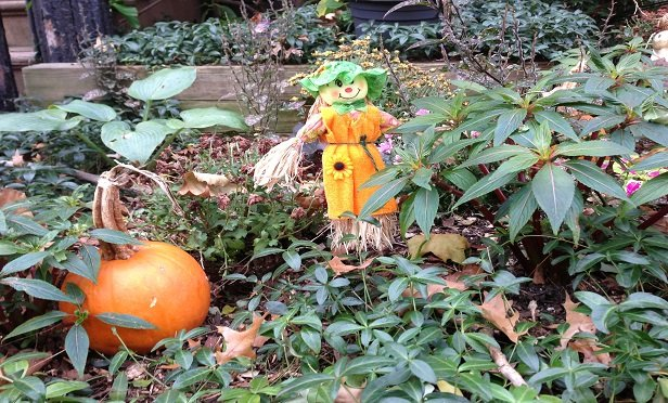 A scarecrow and a pumpkin, in the fall.