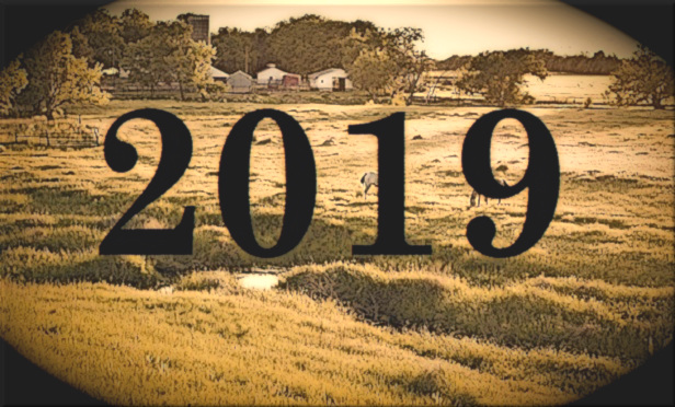 A beautiful pasture in the good old days, in 2019.