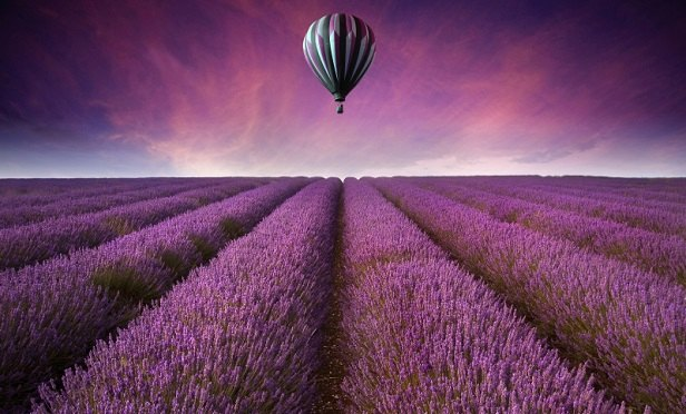 A big purple balloon over a field of purple lavender
