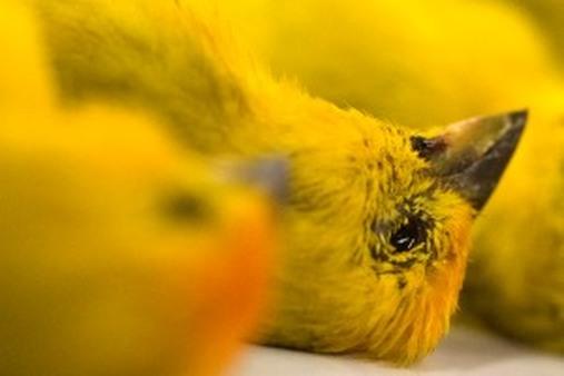 Glenn Neasham: Canary in a coal mine? (AP Photo/Andre Penner)