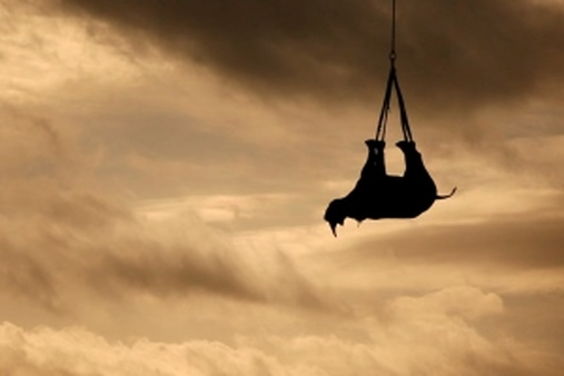 Even airlifting black rhinos away from poachers couldn't save its most endangered subspecies. (AP)