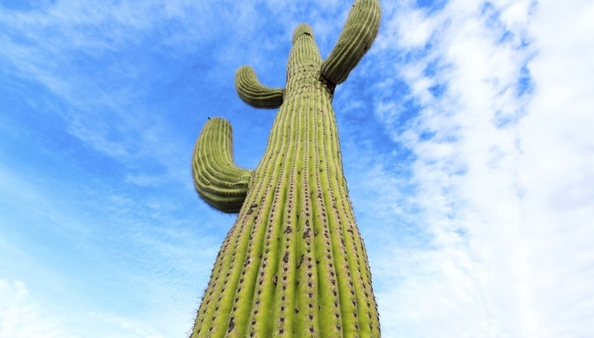 When the climate changes, think like a cactus.