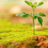 2015 voluntary benefits outlook: More growth