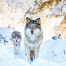 5 skills that will put you at the head of the pack
