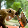 Why a Monkey Managing Your ETF Portfolio Could Boost Returns