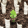 Sustainable Investing: Growing Investor Acceptance