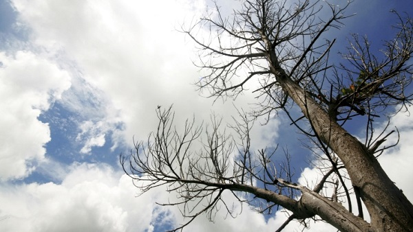 Tree reaching for a cloudy sky (Photo: Thinkstock)