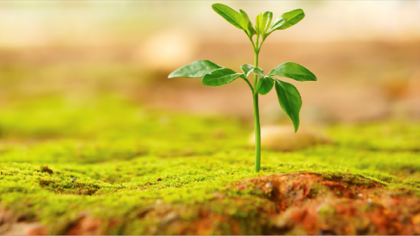 Seedling (Photo: Thinkstock)