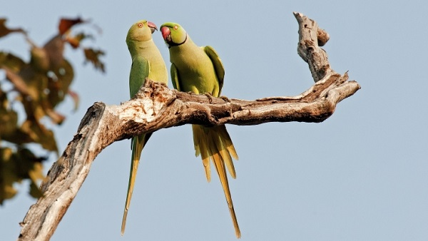 Birds talking (Photo: Thinkstock)